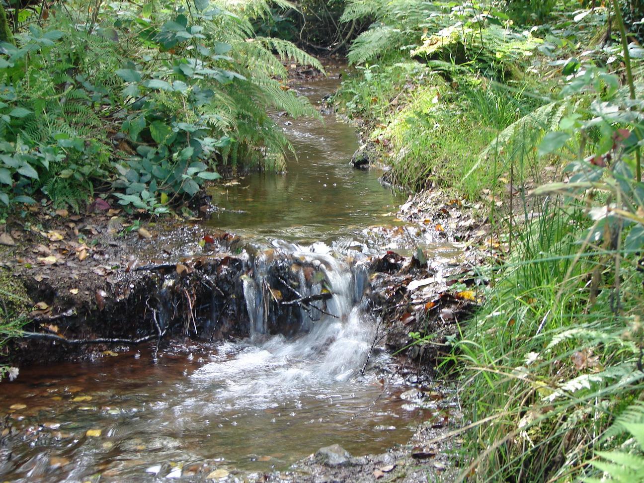 La foret est vaste et un petit ruisseau bien etrange, car l eau a la ...